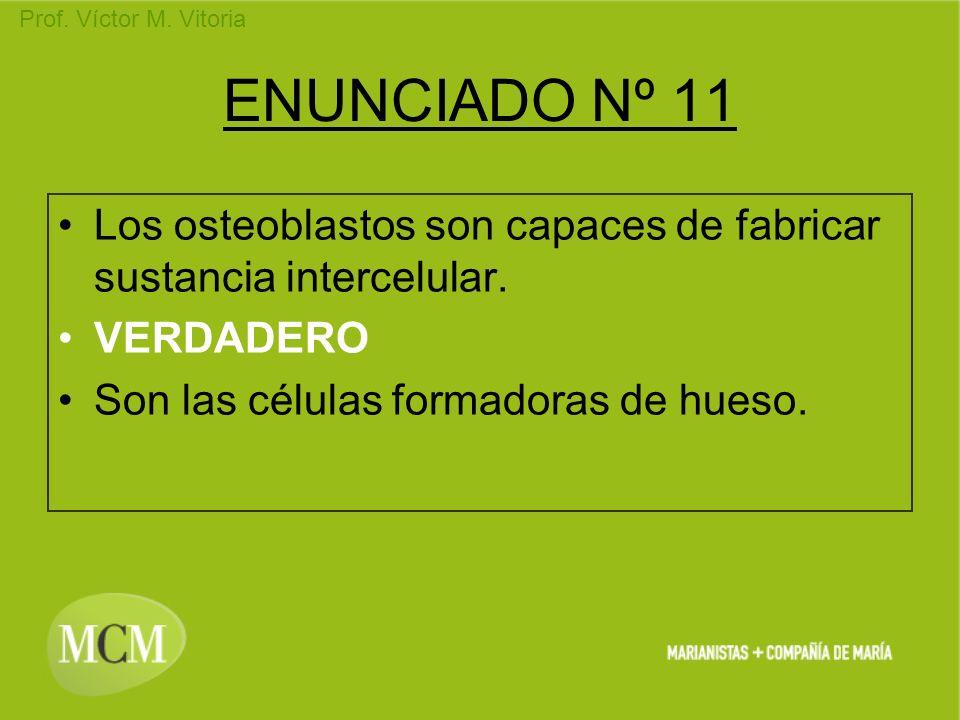 ENUNCIADO Nº 11 Los osteoblastos son capaces de fabricar sustancia intercelular.