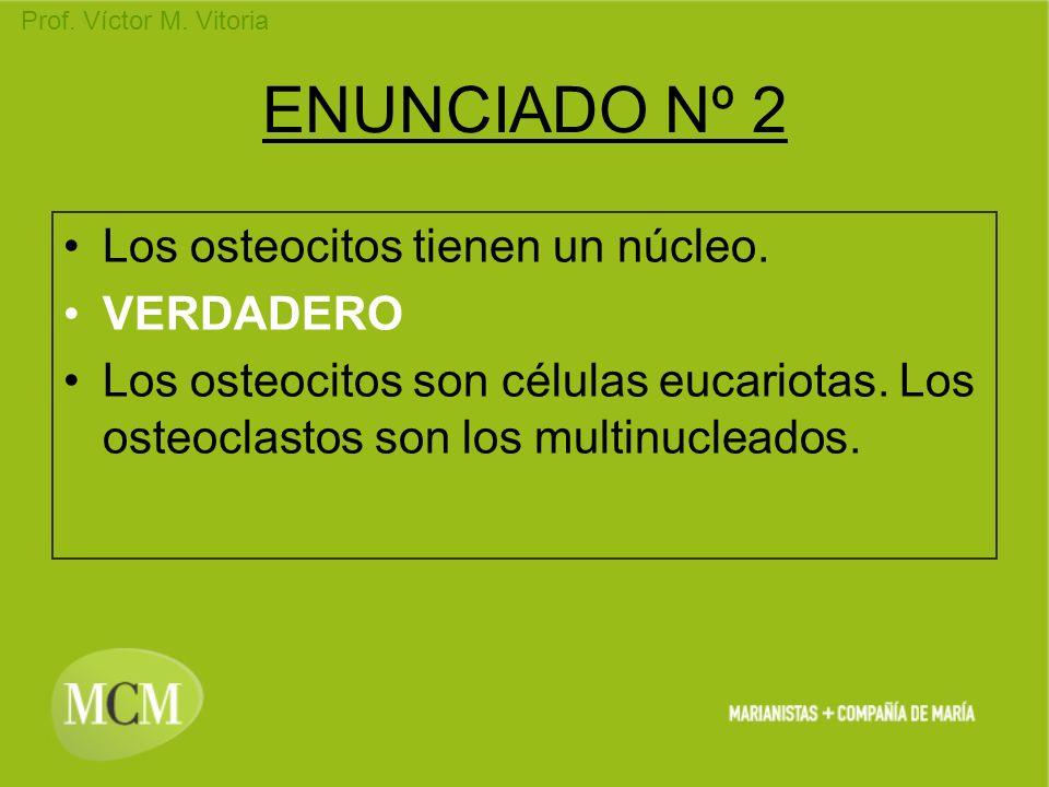 ENUNCIADO Nº 2 Los osteocitos tienen un núcleo. VERDADERO