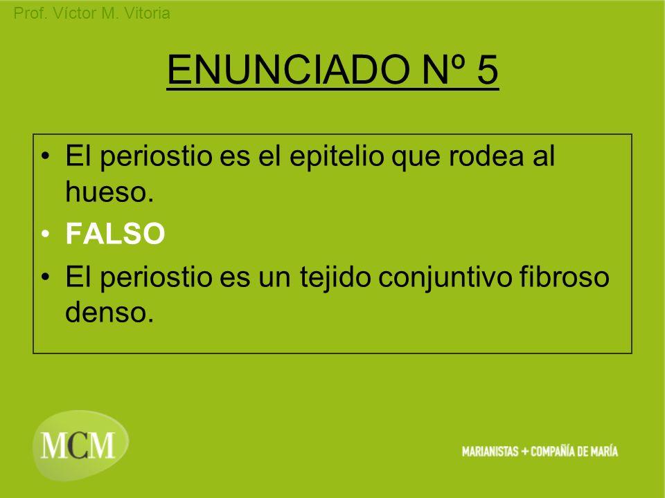 ENUNCIADO Nº 5 El periostio es el epitelio que rodea al hueso. FALSO