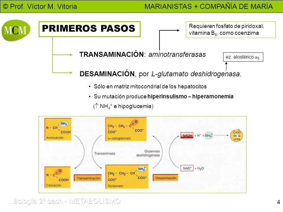 PRIMEROS PASOS TRANSAMINACIÓN: aminotransferasas