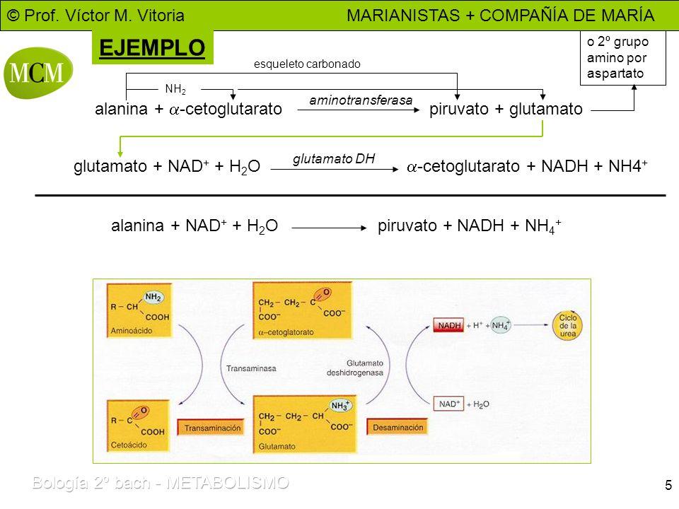 EJEMPLO alanina + a-cetoglutarato piruvato + glutamato