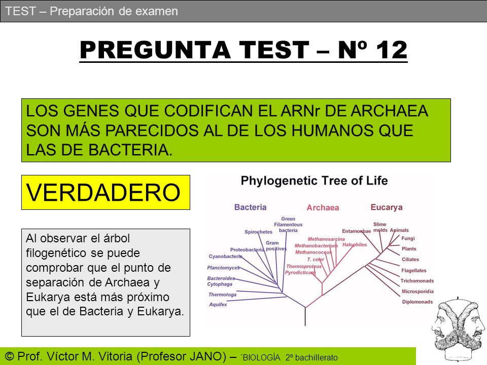 PREGUNTA TEST – Nº 12 VERDADERO
