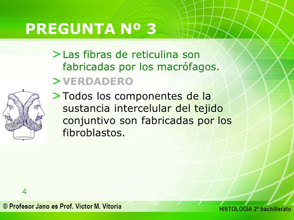 PREGUNTA Nº 3 Las fibras de reticulina son fabricadas por los macrófagos. VERDADERO.
