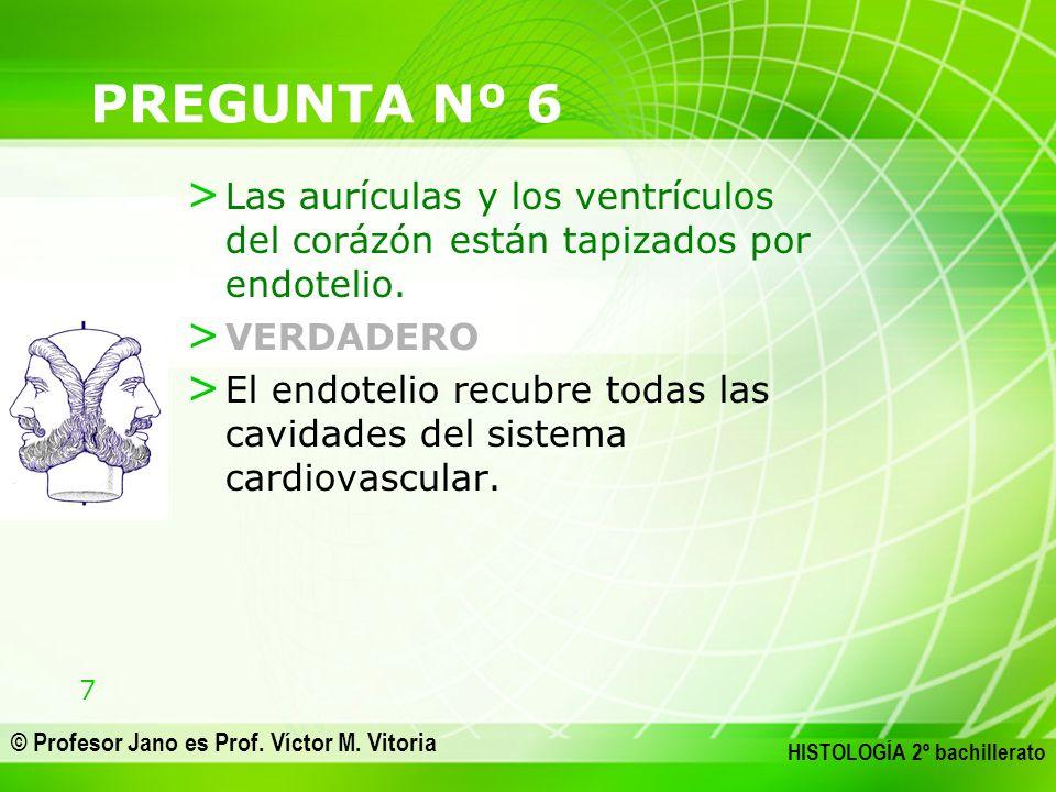 PREGUNTA Nº 6 Las aurículas y los ventrículos del corázón están tapizados por endotelio. VERDADERO.