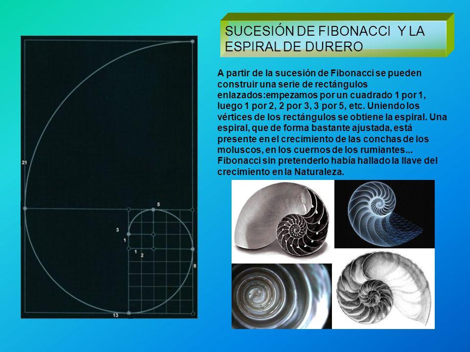 SUCESIÓN DE FIBONACCI Y LA ESPIRAL DE DURERO