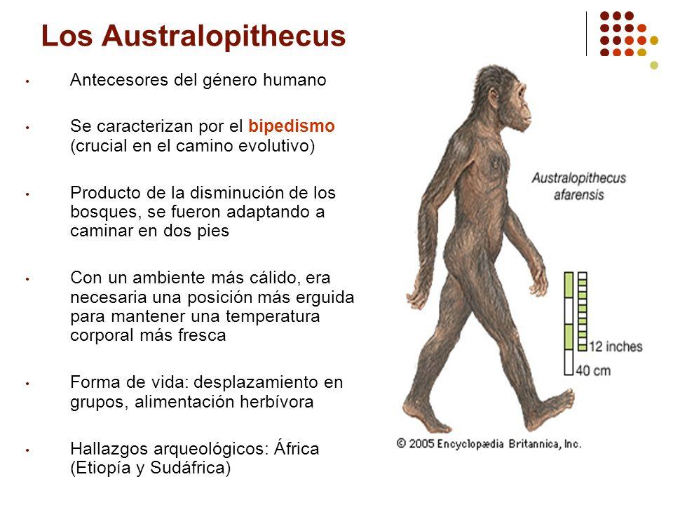 Los Australopithecus Antecesores del género humano