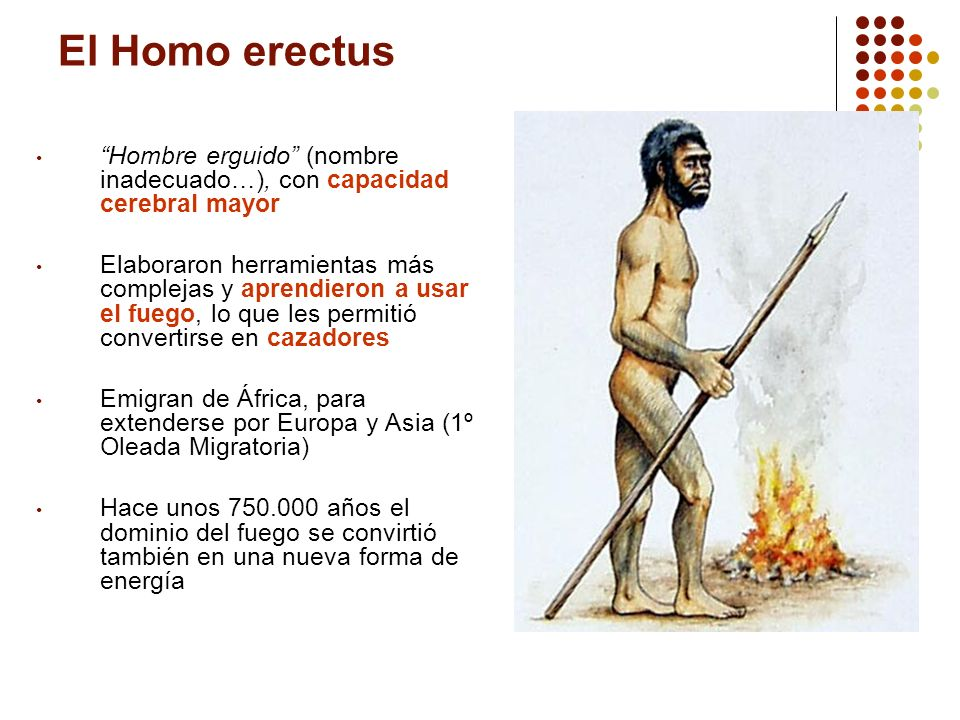 El Homo erectus Hombre erguido (nombre inadecuado…), con capacidad cerebral mayor.
