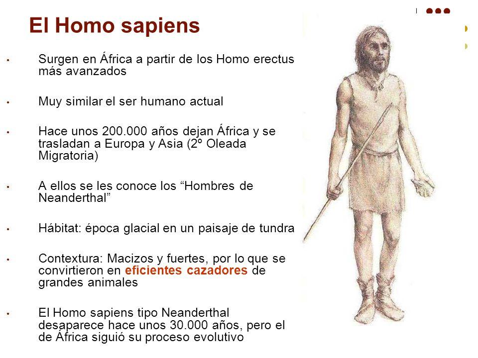 El Homo sapiens Surgen en África a partir de los Homo erectus más avanzados. Muy similar el ser humano actual.
