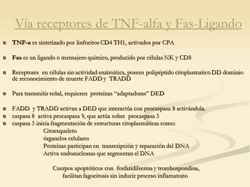 Vía receptores de TNF-alfa y Fas-Ligando