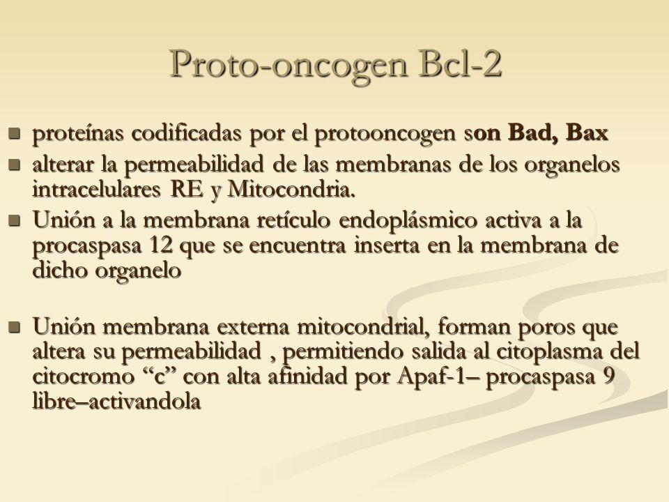 Proto-oncogen Bcl-2 proteínas codificadas por el protooncogen son Bad, Bax.