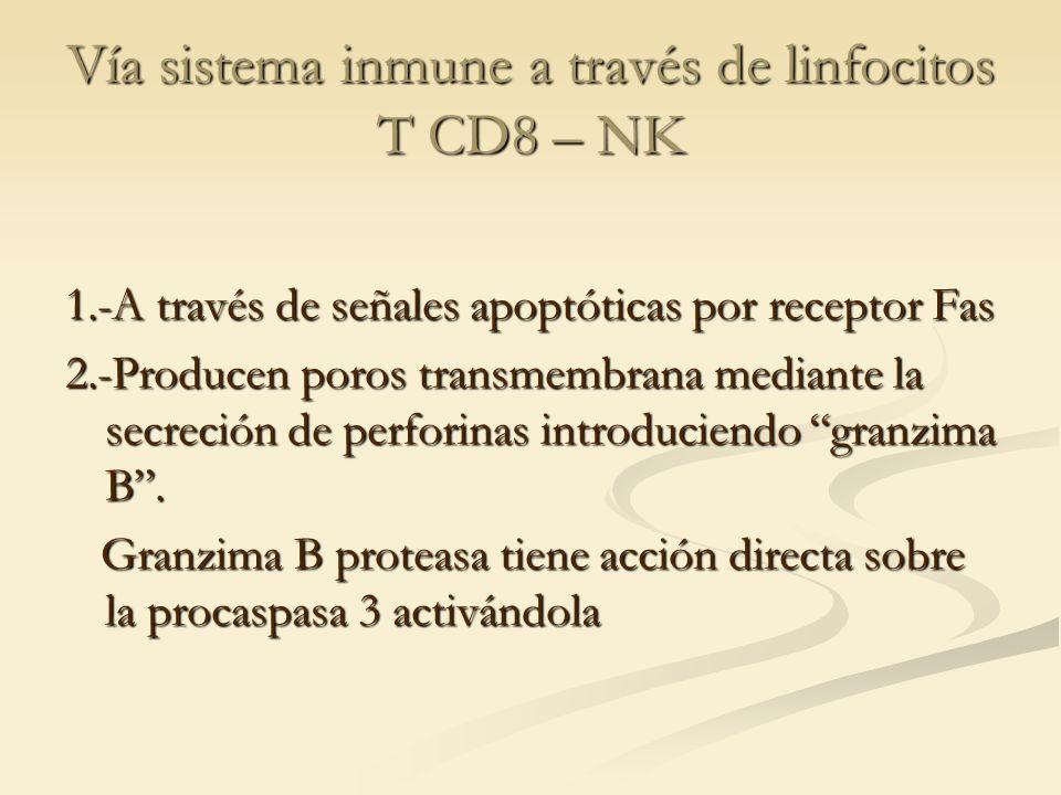 Vía sistema inmune a través de linfocitos T CD8 – NK