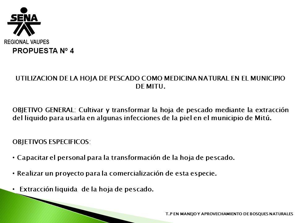 REGIONAL VAUPES PROPUESTA Nº 4. UTILIZACION DE LA HOJA DE PESCADO COMO MEDICINA NATURAL EN EL MUNICIPIO DE MITU.