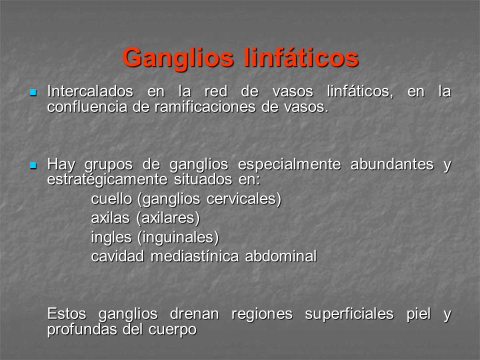 Ganglios linfáticosIntercalados en la red de vasos linfáticos, en la confluencia de ramificaciones de vasos.