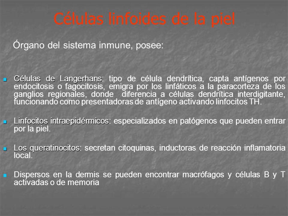 Células linfoides de la piel