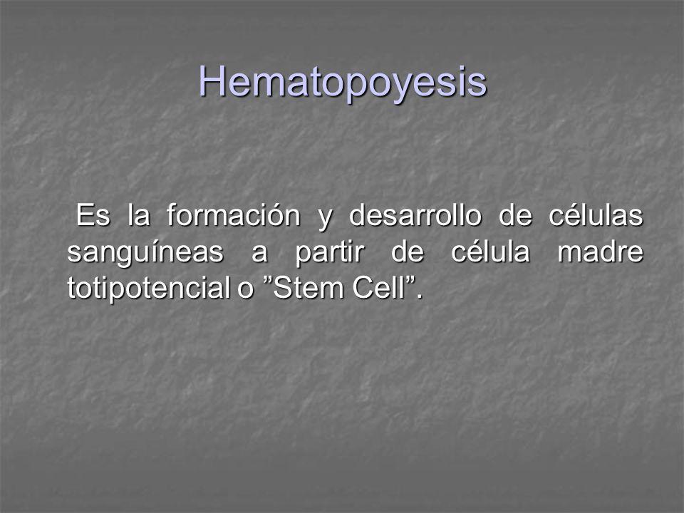 Hematopoyesis Es la formación y desarrollo de células sanguíneas a partir de célula madre totipotencial o Stem Cell .