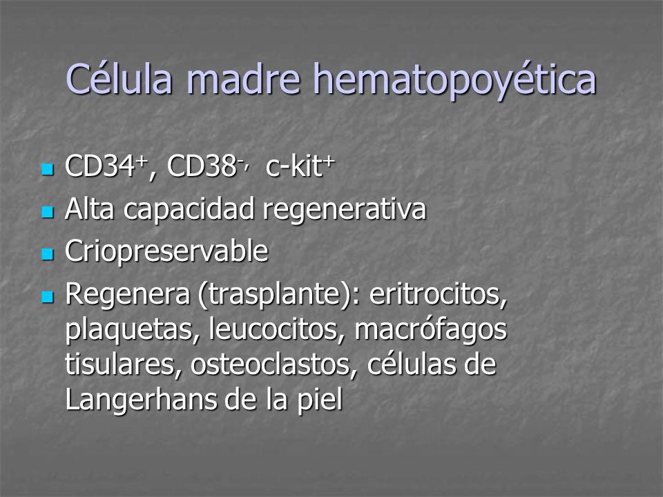 Célula madre hematopoyética