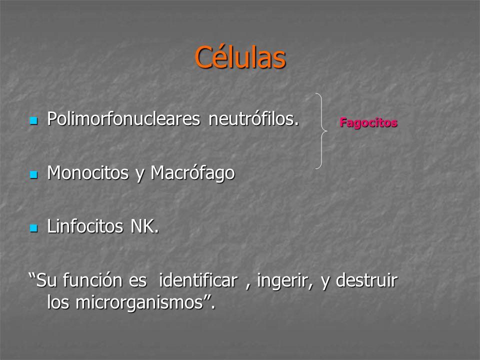 Células Polimorfonucleares neutrófilos. Monocitos y Macrófago