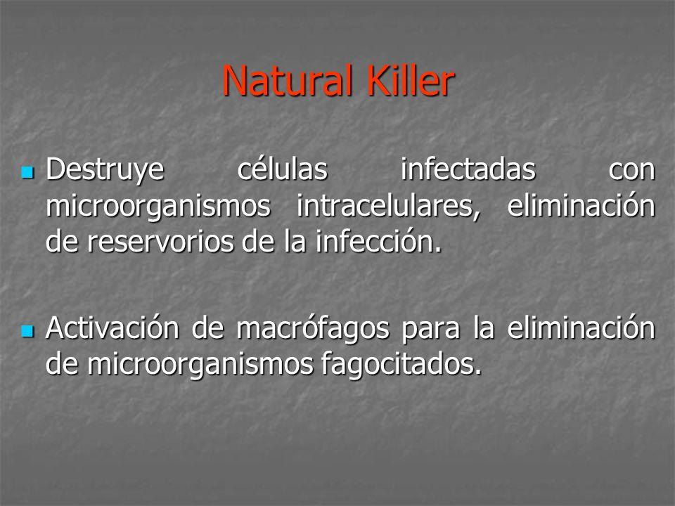 Natural KillerDestruye células infectadas con microorganismos intracelulares, eliminación de reservorios de la infección.
