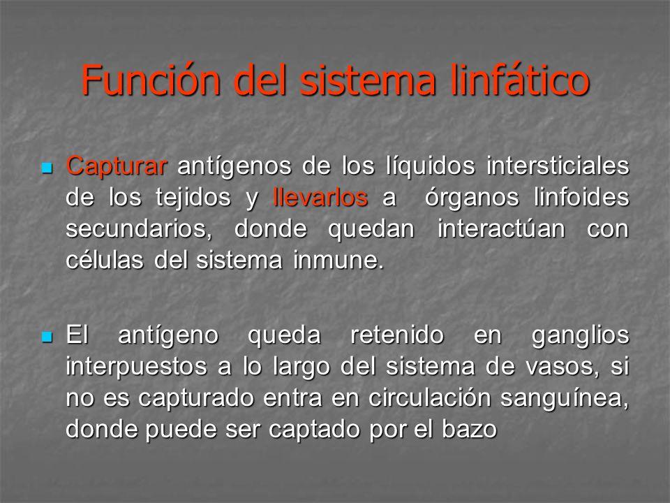 Función del sistema linfático