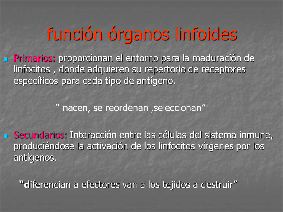 función órganos linfoides