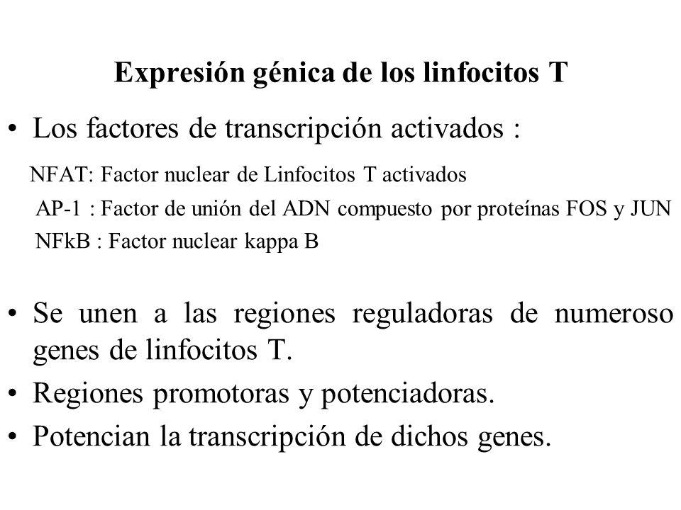 Expresión génica de los linfocitos T