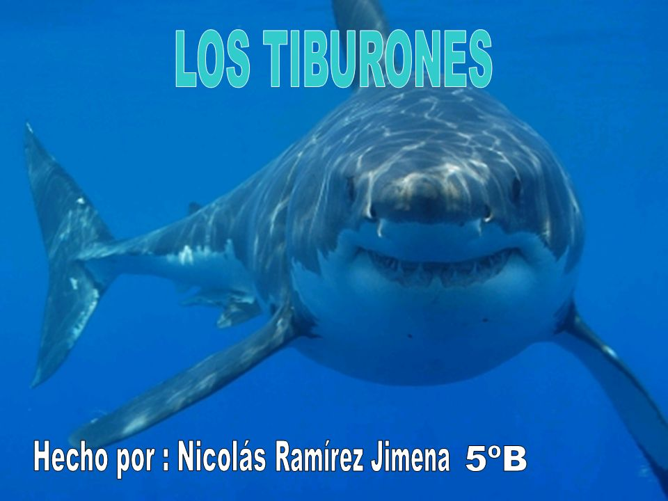 LOS TIBURONES Hecho por : Nicolás Ramírez Jimena 5ºB