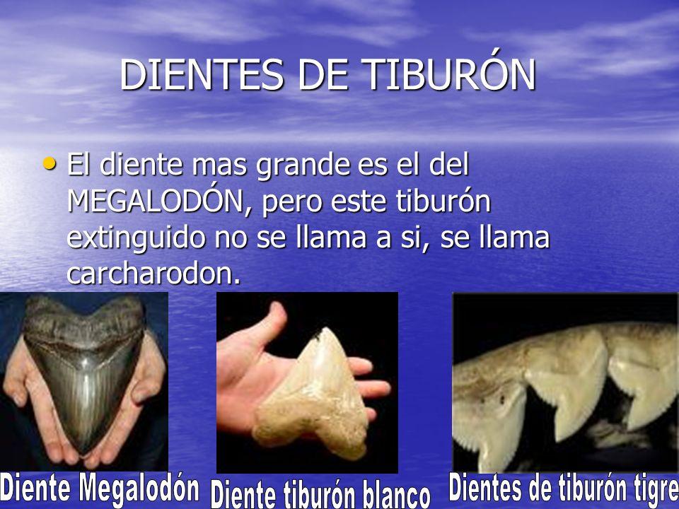 Dientes de tiburón tigre
