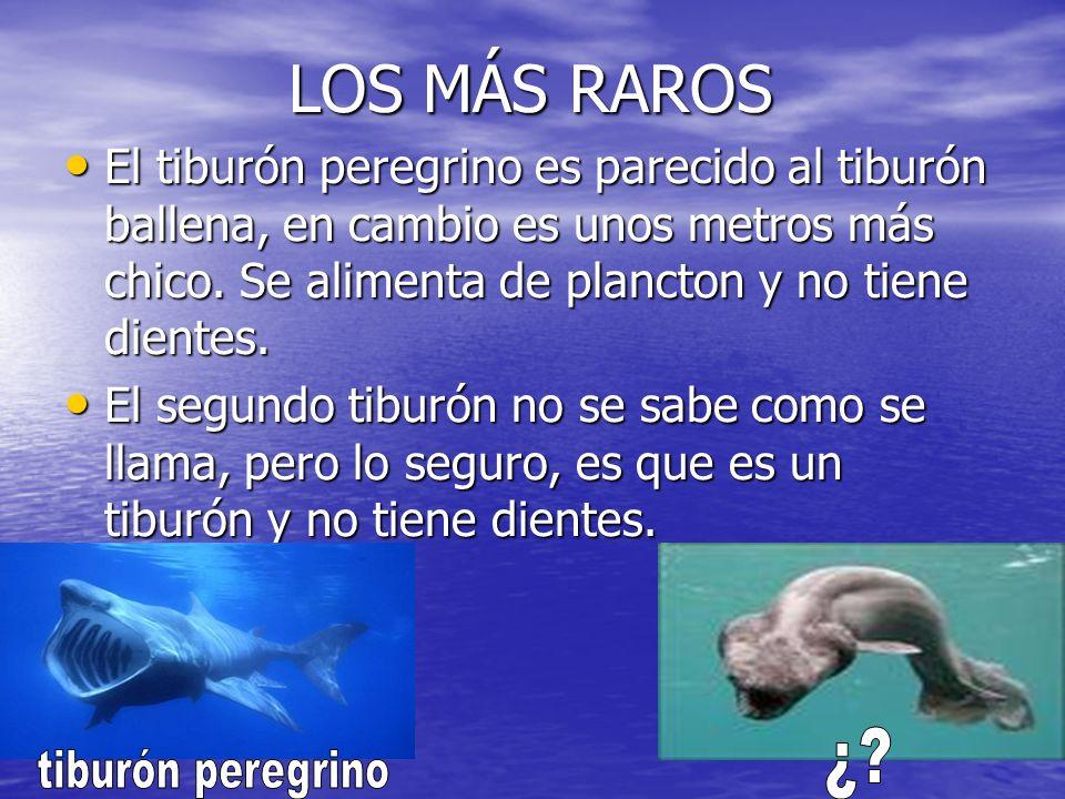 LOS MÁS RAROS ¿ tiburón peregrino