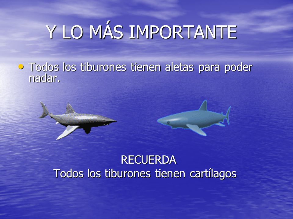 Y LO MÁS IMPORTANTE Todos los tiburones tienen aletas para poder nadar.