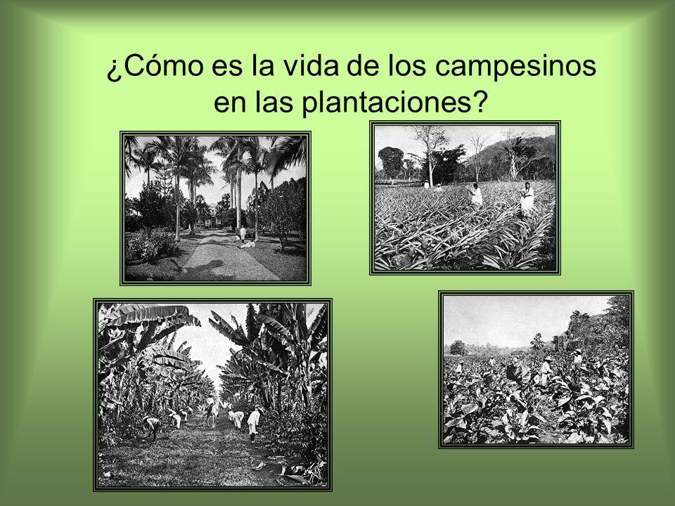 ¿Cómo es la vida de los campesinos en las plantaciones