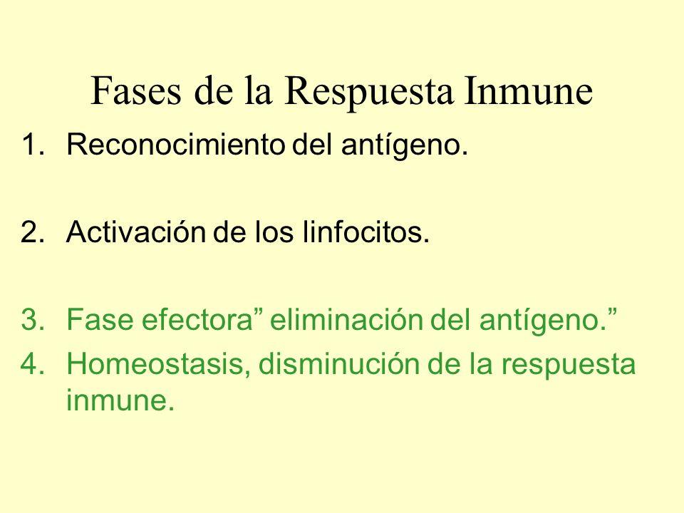 Fases de la Respuesta Inmune