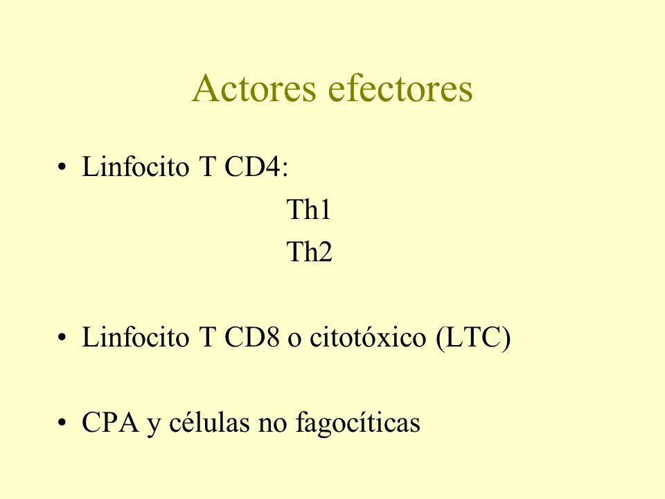 Actores efectores Linfocito T CD4: Th1 Th2