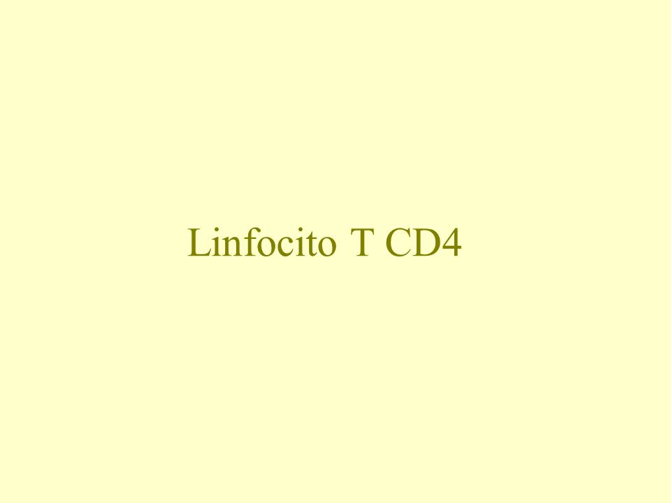 Linfocito T CD4