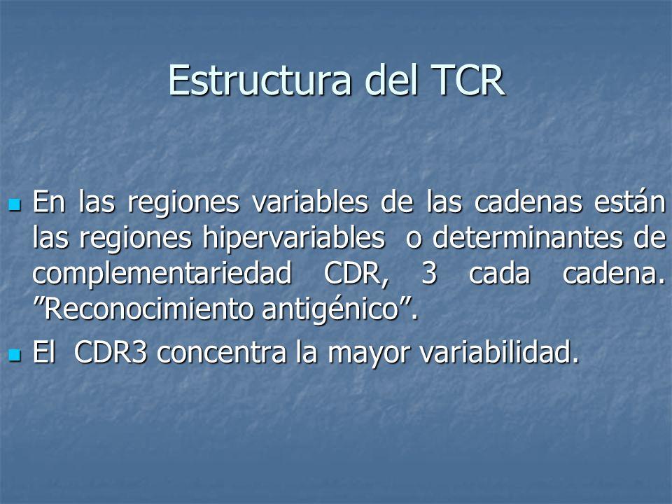 Estructura del TCR