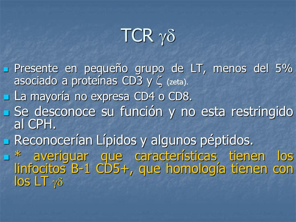 TCR  La mayoría no expresa CD4 o CD8.