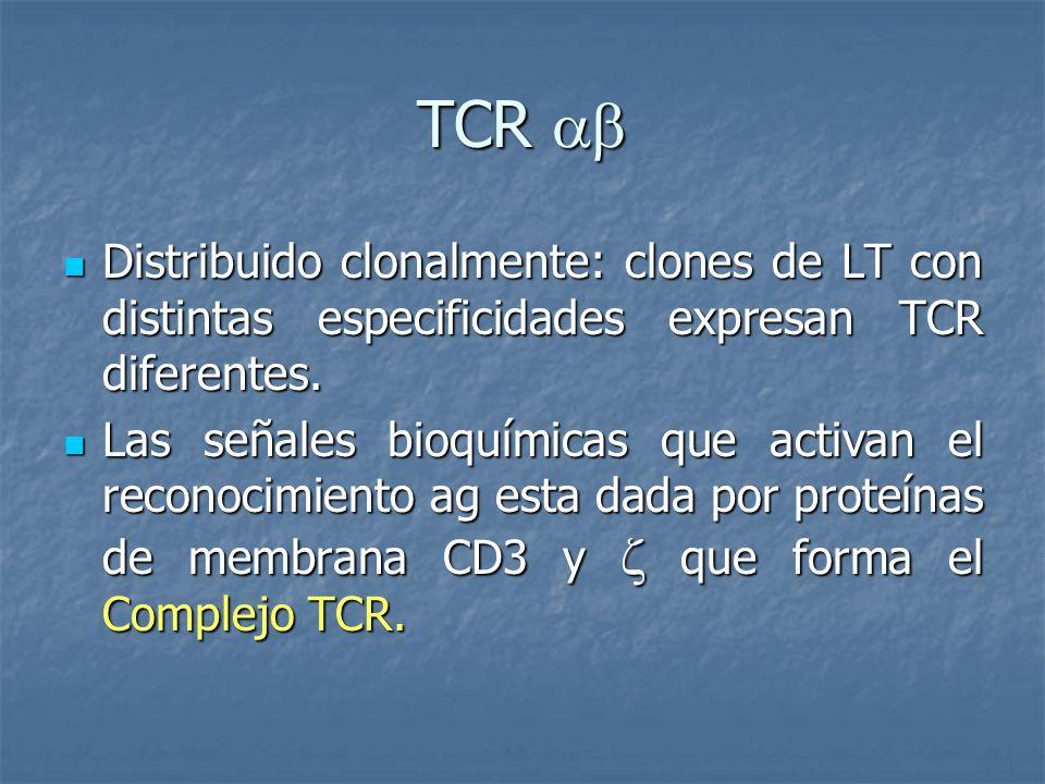 TCR  Distribuido clonalmente: clones de LT con distintas especificidades expresan TCR diferentes.