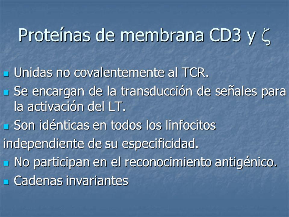 Proteínas de membrana CD3 y 