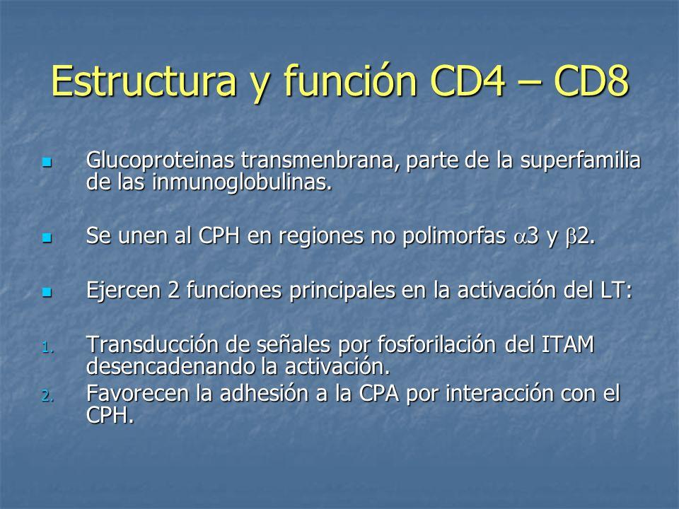 Estructura y función CD4 – CD8