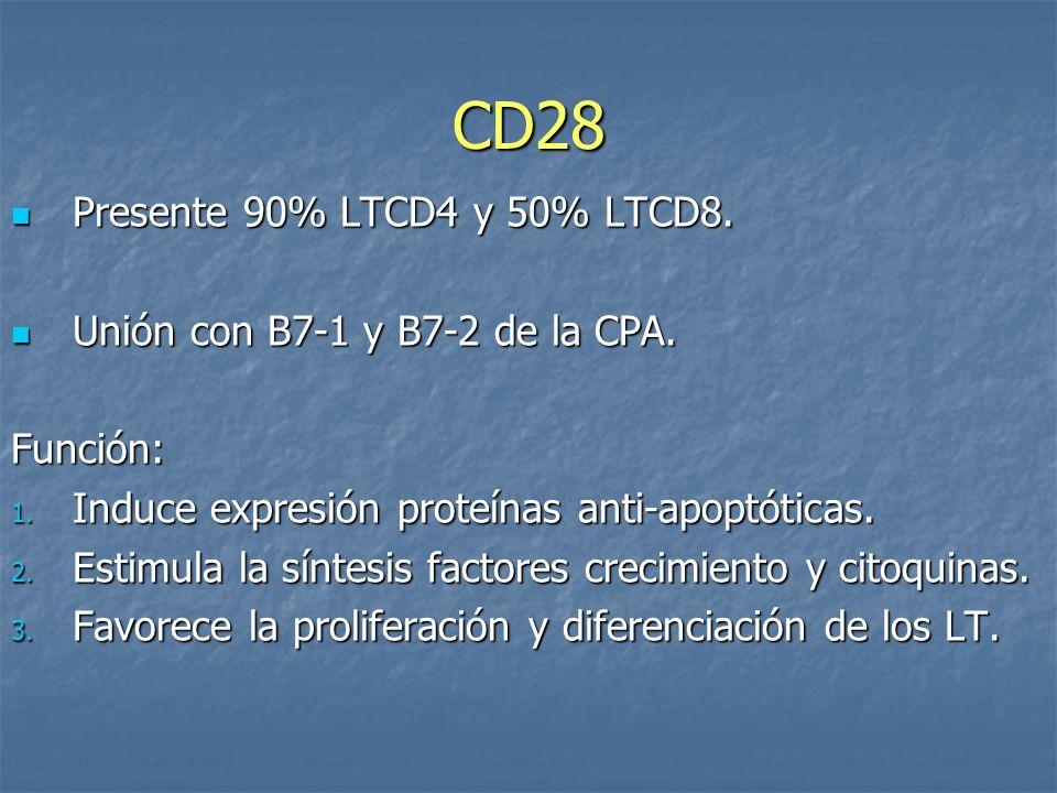 CD28 Presente 90% LTCD4 y 50% LTCD8. Unión con B7-1 y B7-2 de la CPA.