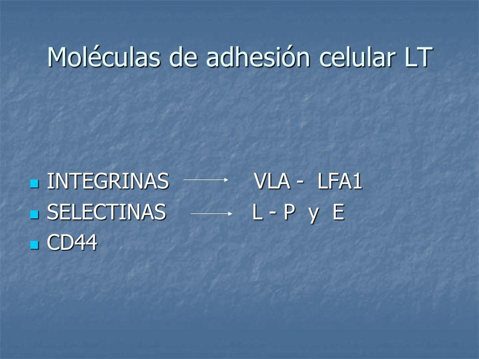 Moléculas de adhesión celular LT