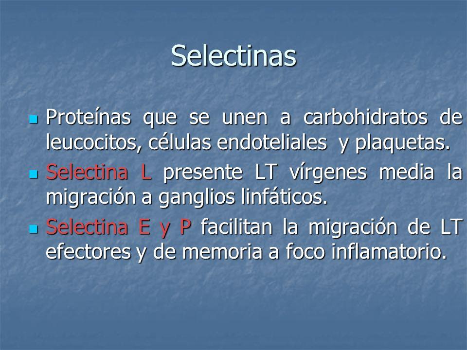 Selectinas Proteínas que se unen a carbohidratos de leucocitos, células endoteliales y plaquetas.