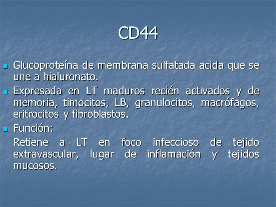 CD44 Glucoproteína de membrana sulfatada acida que se une a hialuronato.