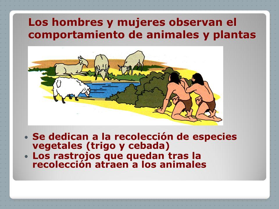 Los hombres y mujeres observan el comportamiento de animales y plantas