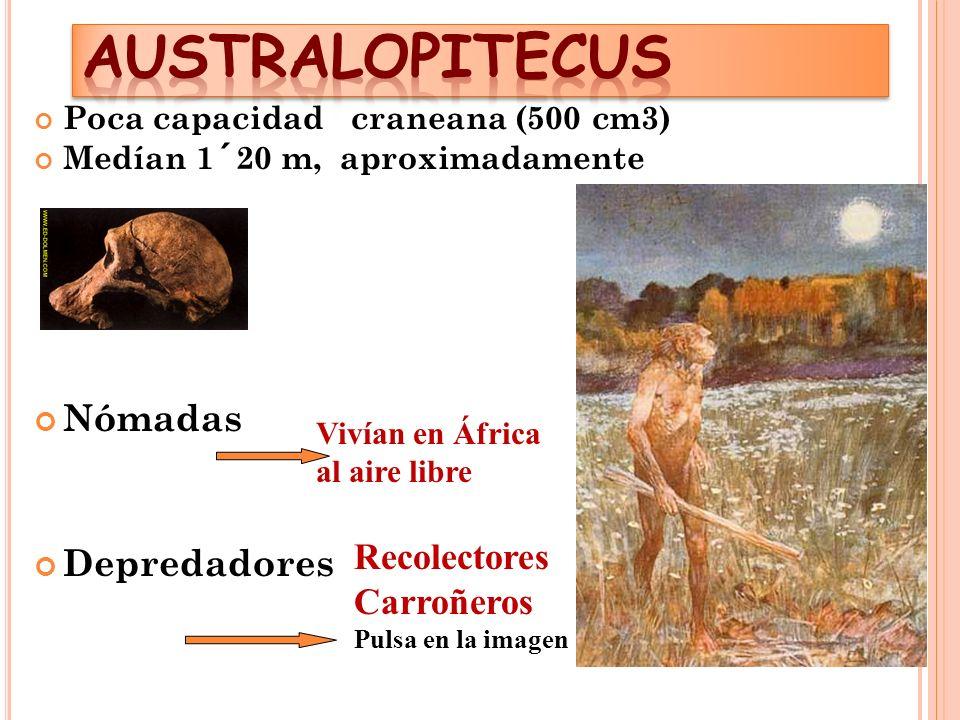 AUSTRALOPITECUS Nómadas Depredadores Recolectores Carroñeros