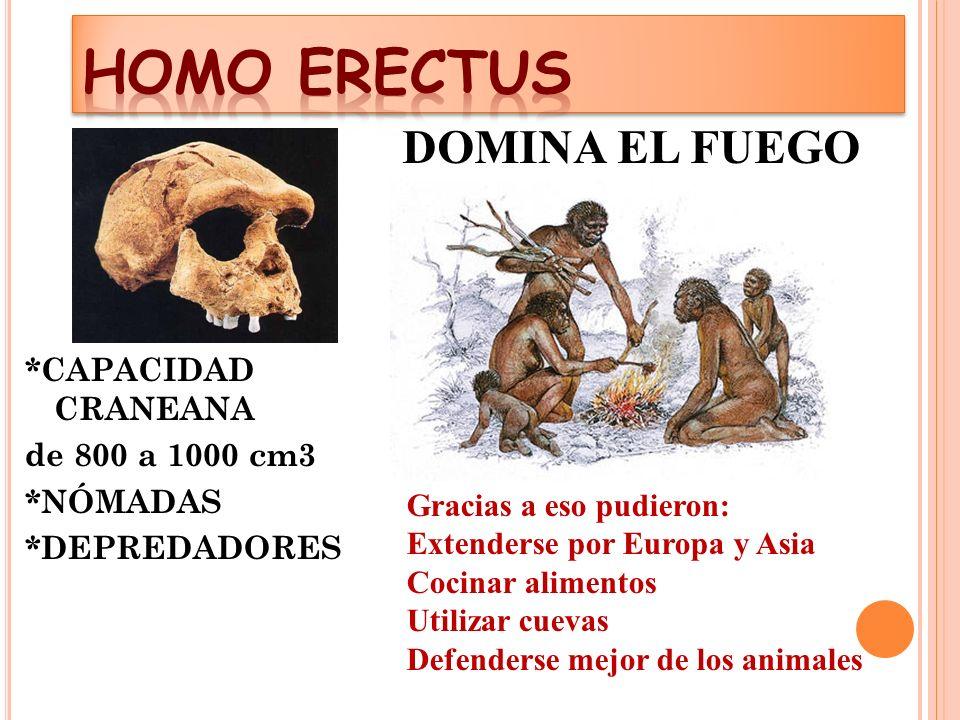 HOMO ERECTUS DOMINA EL FUEGO