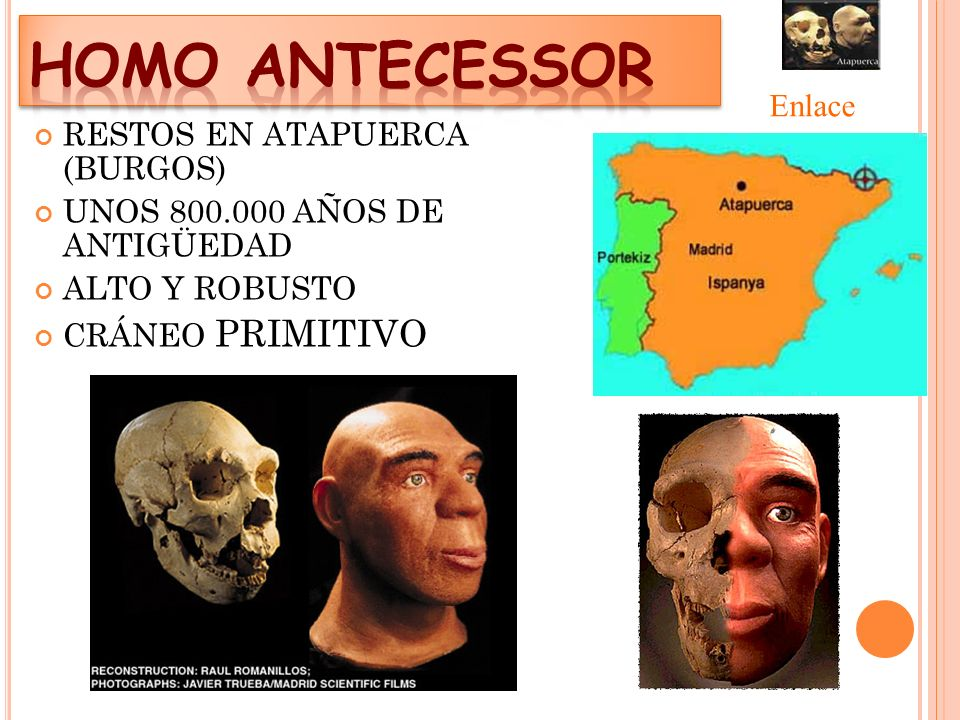 HOMO ANTECESSOR Enlace RESTOS EN ATAPUERCA (BURGOS)