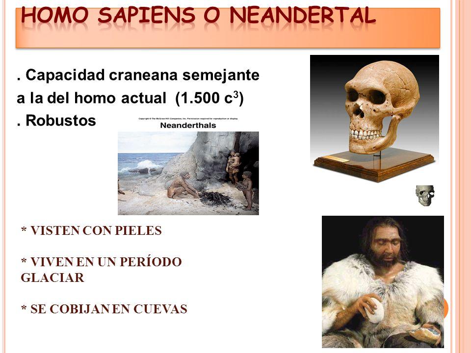HOMO SAPIENS O NEANDERTAL