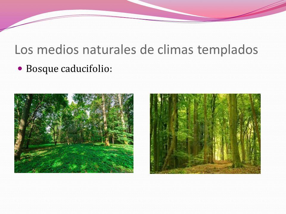 Los medios naturales de climas templados