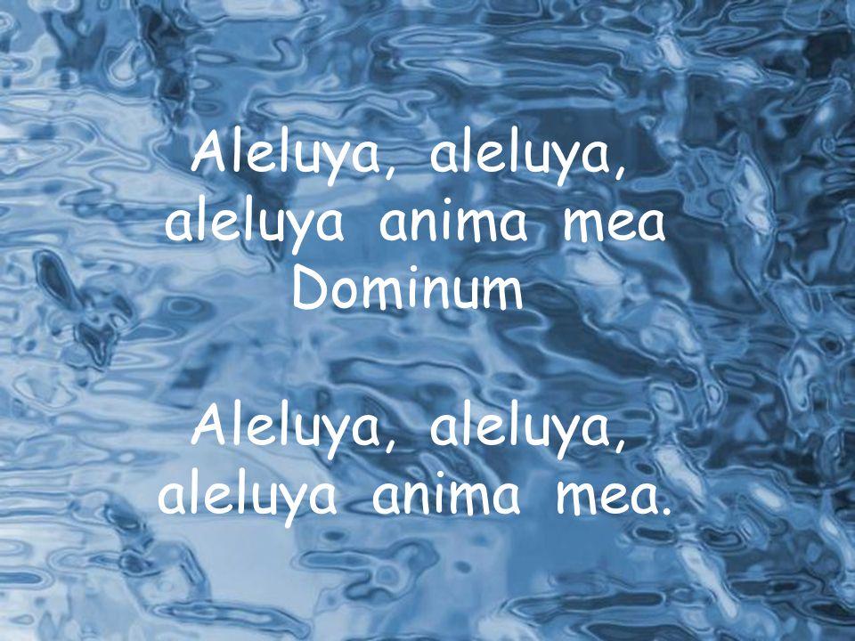 Aleluya, aleluya, aleluya anima mea Dominum aleluya anima mea.