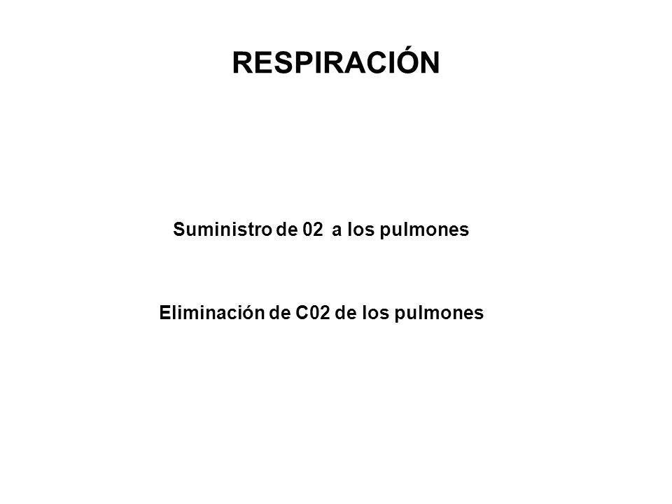 Suministro de 02 a los pulmones